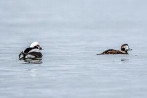 Spring bird migration in Estonia